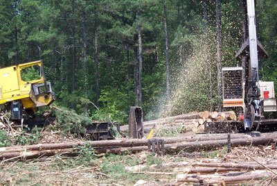 Our Services | Kingwood Forestry Services, Inc  - Forestry